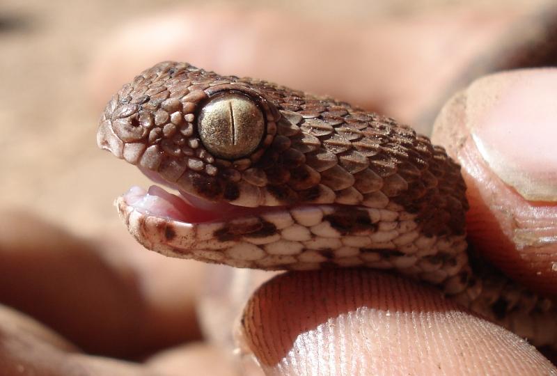 15 Deadliest Snakes from snake kingdom  Gets Inside