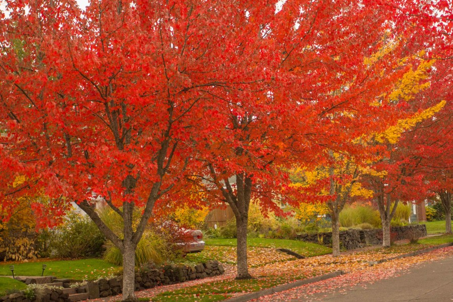 Eugene in Autumn