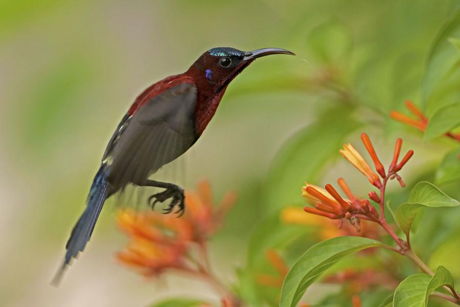 Vigor's sunbird Rahul Alvares Goa